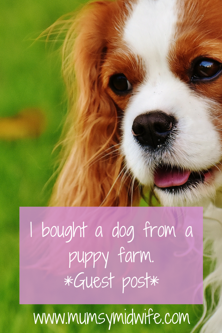 Puppy farm, puppy farming, buying a dog, buying a puppy, how to choose a puppy, preparing for a puppy, puppy tips